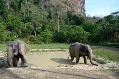 Слоны выходя ванна грязи на святилище стоковые фотографии rf