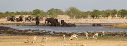 Слоны, жираф и импалы вокруг waterhole стоковое фото rf