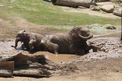 Слоны играя в грязи Стоковая Фотография