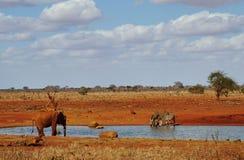 Слоны и зебры на waterhole Tsavo восточном Стоковое Изображение RF