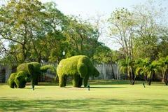 Слоны - кусты отрезанные к животным figufres в парке дворца боли челки Стоковые Изображения