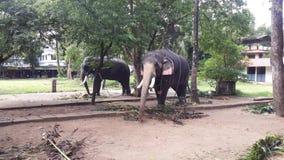Слоны на виске Керале Guruvayur стоковое фото