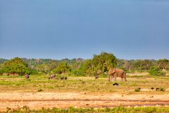 Слоны, павлины, скотины, одичалые свиньи, драка около любят в саде Eden в Yala Nationalpark стоковые изображения
