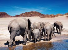 слоны Стоковые Изображения RF