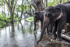 слон Азии Стоковые Фото