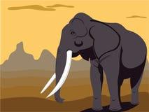 слон быка Стоковая Фотография RF