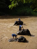 слон ванны Стоковое фото RF