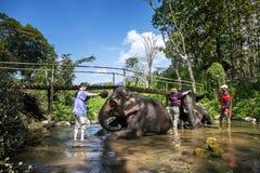 слон ванны Стоковое Изображение RF