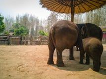 Слон выглядит как встречающ стоковое изображение rf