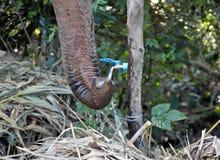 Слон выпивает воду из крана в зоопарке стоковое изображение rf