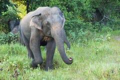 Слон в заповеднике стоковое фото rf