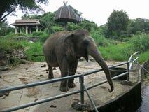 Слон в зоопарке стоковая фотография