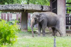 Слон в зоопарке dusit, Таиланде стоковое фото rf