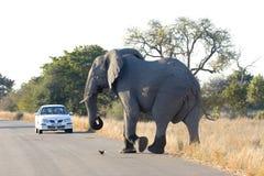 Слон в национальном парке Kruger стоковое изображение