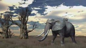 Слон идет через саванну бесплатная иллюстрация