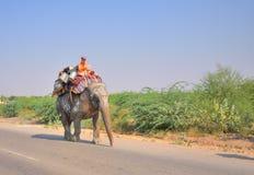 Слон идя в улицу стоковое изображение rf