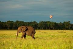 Слон и воздушный шар в Кении стоковое фото rf