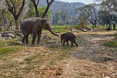 Слон и ее ребенок стоковая фотография