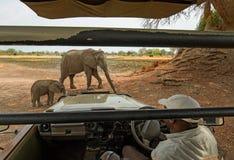 Слон матери и икры стоя близко к кораблю сафари в южном национальном парке luangwa, Замбии Стоковые Фотографии RF