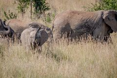 Слон младенца быть шаловливый в траве Стоковое Изображение
