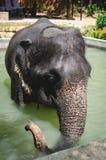 Слон младенца в бассейне для купать Стоковые Изображения