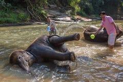 Слон младенца купая в реке около Чиангмая, Таиланда Стоковое Фото