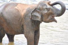 Слон младенца поливая в реке Стоковые Изображения