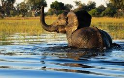 Слон принимая освежая ванну стоковые изображения