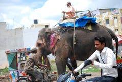 Слон причиняя затор движения на индийских дорогах Стоковое фото RF