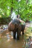 слон распыляя для того чтобы намочить женщину Стоковая Фотография