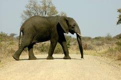 слон скрещивания Стоковое Изображение