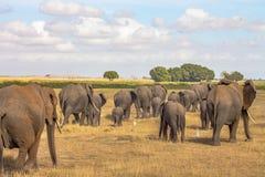 Слон услышанный в глуши стоковая фотография
