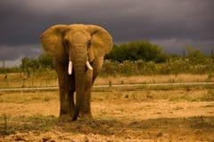 слон стоковое изображение rf