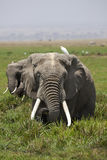 слон стоковое фото