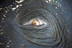 слон 9 Стоковое фото RF