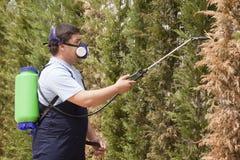 Служба борьбы с грызунами и паразитами насекомых человека распыляя стоковые фотографии rf