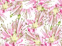 Смелая картина цветка иллюстрация штока
