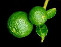 Смертная казнь через повешение апельсина бергамота приносить при лист изолированные на черном backg Стоковое Изображение
