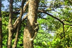 Смертная казнь через повешение белки на дереве Стоковые Изображения