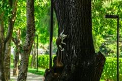 Смертная казнь через повешение белки на дереве Стоковые Фото
