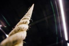 Смертная казнь через повешение веревочки макроса от потолка в спортзале Мотивировка, концепция улучшения Никто стоковое изображение rf