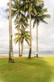 Смертная казнь через повешение гамака между кокосовыми пальмами на пляже Стоковые Фотографии RF