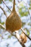 Смертная казнь через повешение гнезда птицы на ветвях Стоковые Фотографии RF