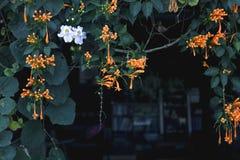 Смертная казнь через повешение дерева на крыше Стоковые Фото