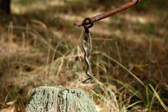 Смертная казнь через повешение змейки травы на ручке Стоковые Фотографии RF