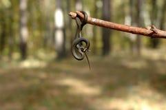 Смертная казнь через повешение змейки травы на ручке Стоковая Фотография RF