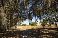 Смертная казнь через повешение испанского мха от деревьев на парке Kissimmee озера, Флориде Стоковое Изображение RF
