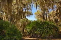 Смертная казнь через повешение испанского мха от деревьев на парке Kissimmee озера, Флориде Стоковая Фотография RF