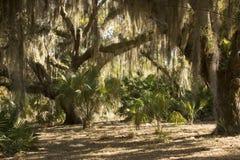 Смертная казнь через повешение испанского мха от деревьев на парке Kissimmee озера, Флориде Стоковые Изображения RF