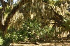 Смертная казнь через повешение испанского мха от деревьев на парке Kissimmee озера, Флориде Стоковое Изображение